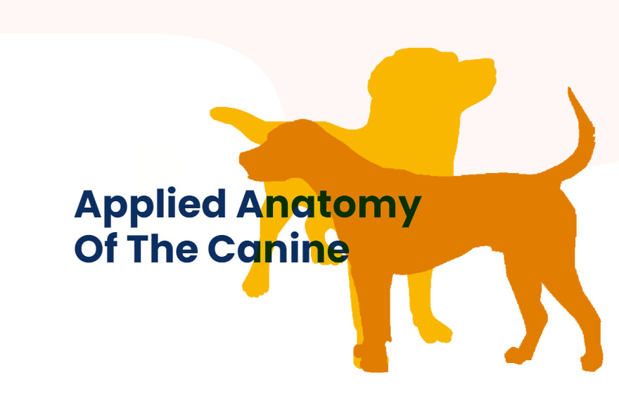 Course Image VET Certified Applied Anatomy Of The Canine